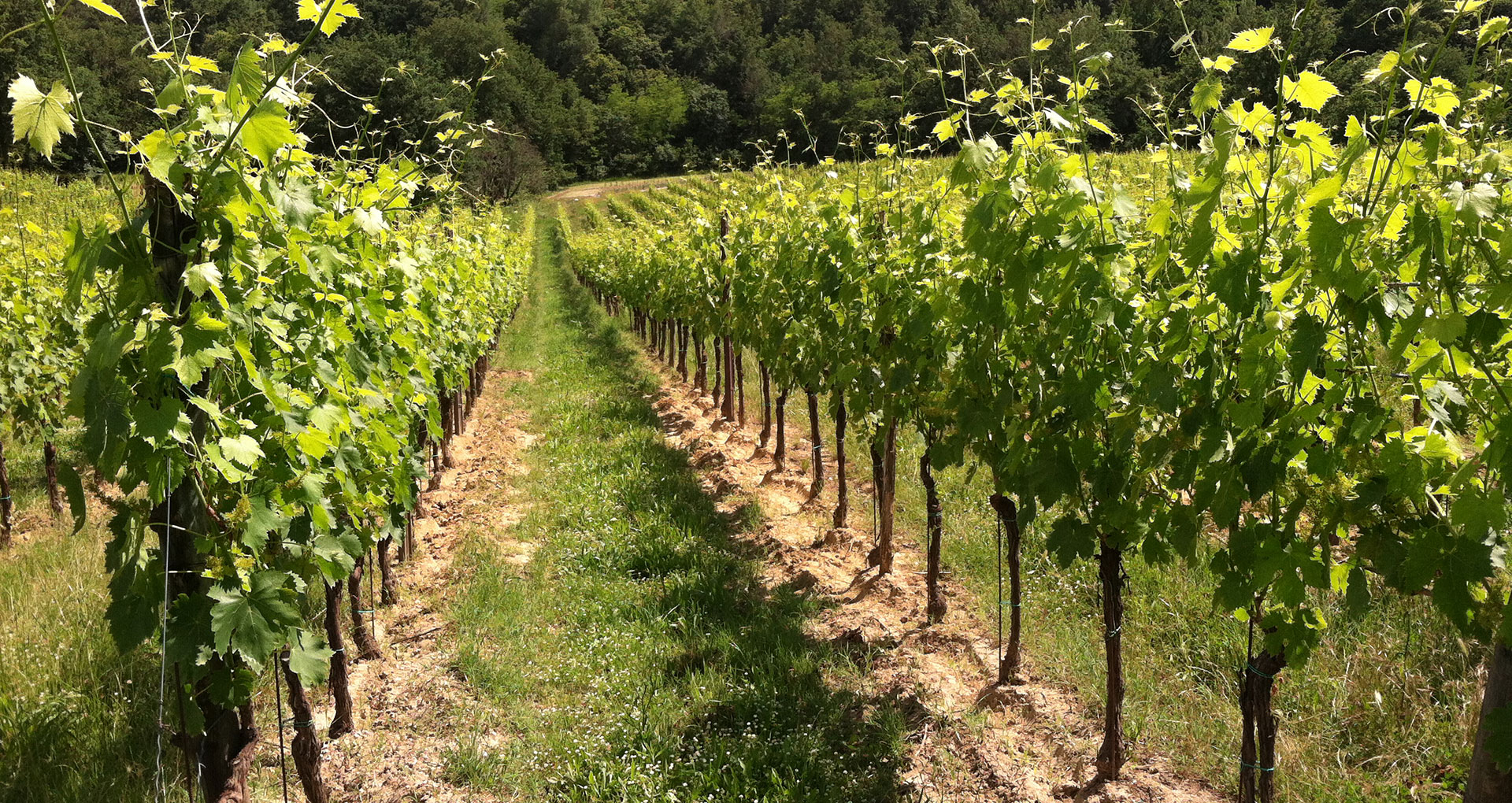 Fare un gran vino è come creare un'opera d'arte
